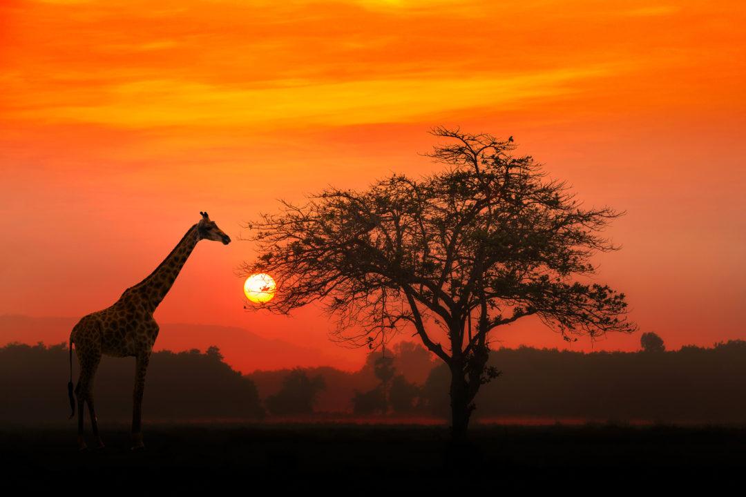 safari tanzania luna de miel